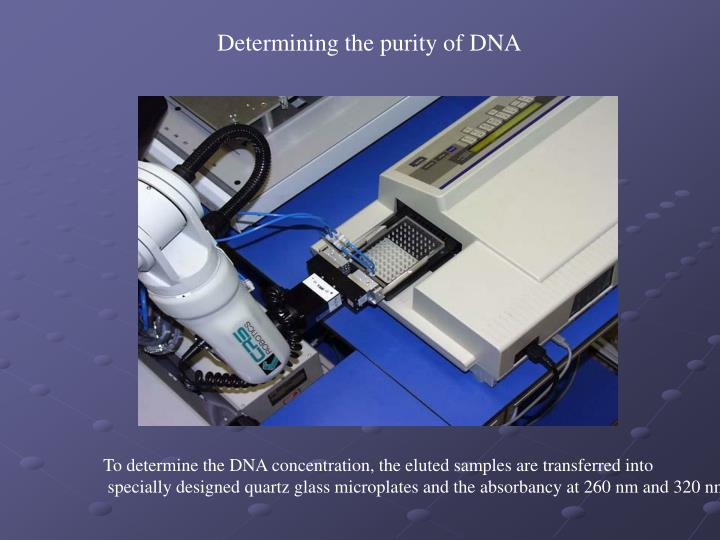Determining the purity of DNA