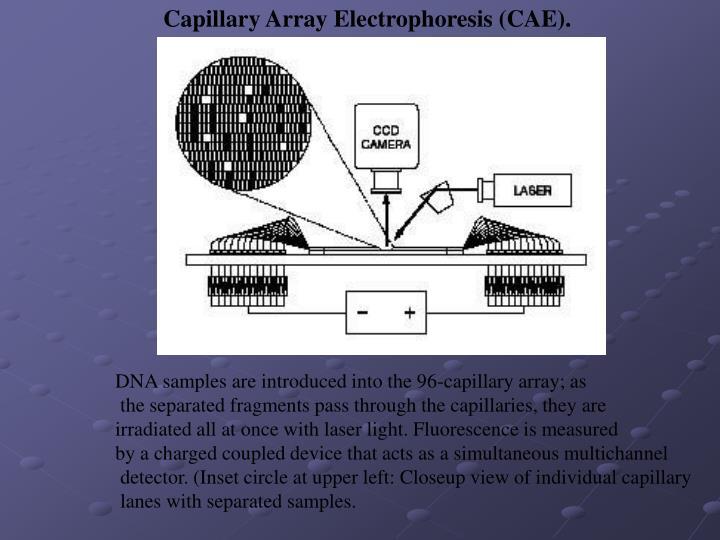 Capillary Array Electrophoresis (CAE).