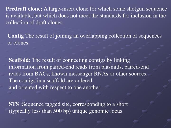 Predraft clone: