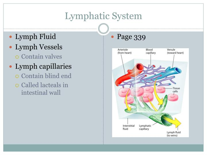 structure and function of the spleen essay In an essay of approximately 500 words, define and discuss the function and importance of the human body's lymphatic system the lymphatic system is a complex.