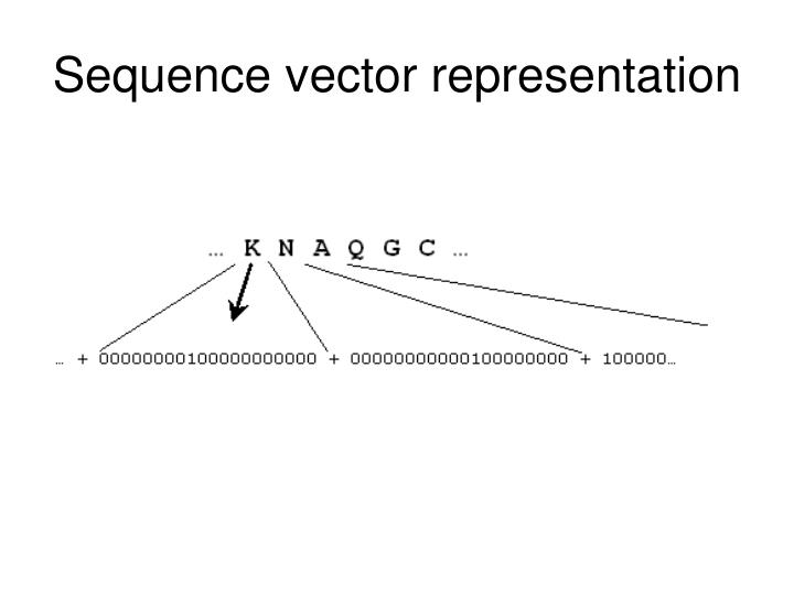Sequence vector representation