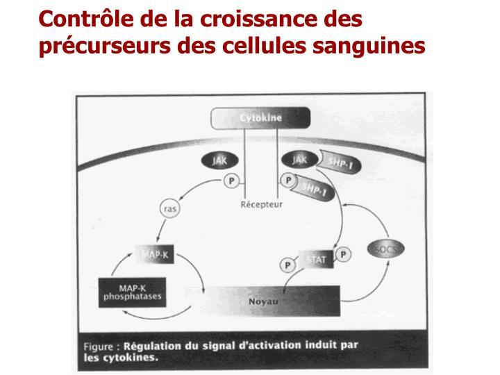 Contrôle de la croissance des précurseurs des cellules sanguines
