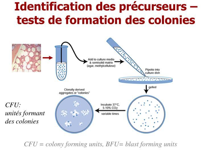 Identification des précurseurs – tests de formation des colonies