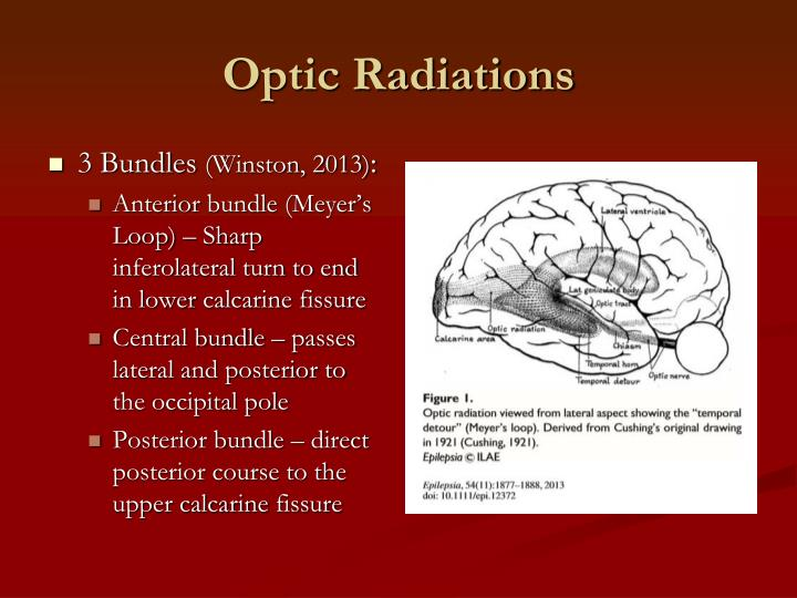 Optic Radiations