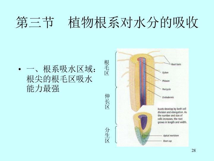 第三节 植物根系对水分的吸收