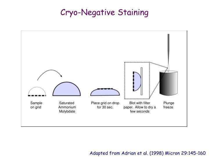 Cryo-Negative Staining