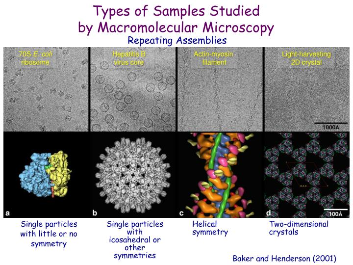 Types of Samples Studied