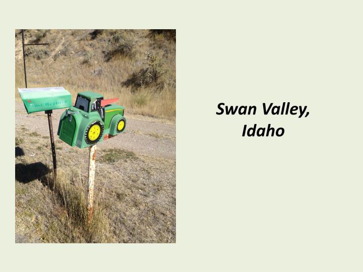 Swan Valley,