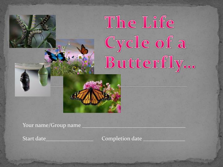 The Life Cycle of a Butterfly…