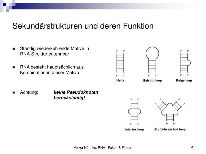Sekundärstrukturen und deren Funktion