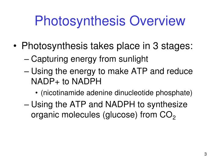 Photosynthesis overview1