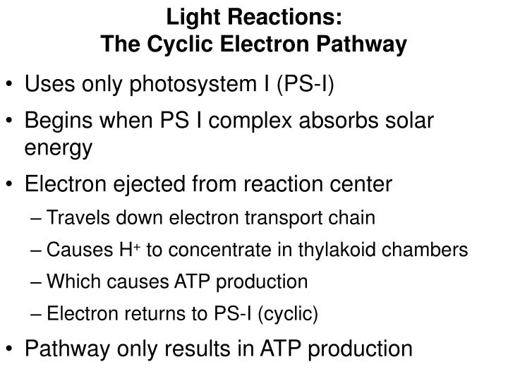 Light Reactions: