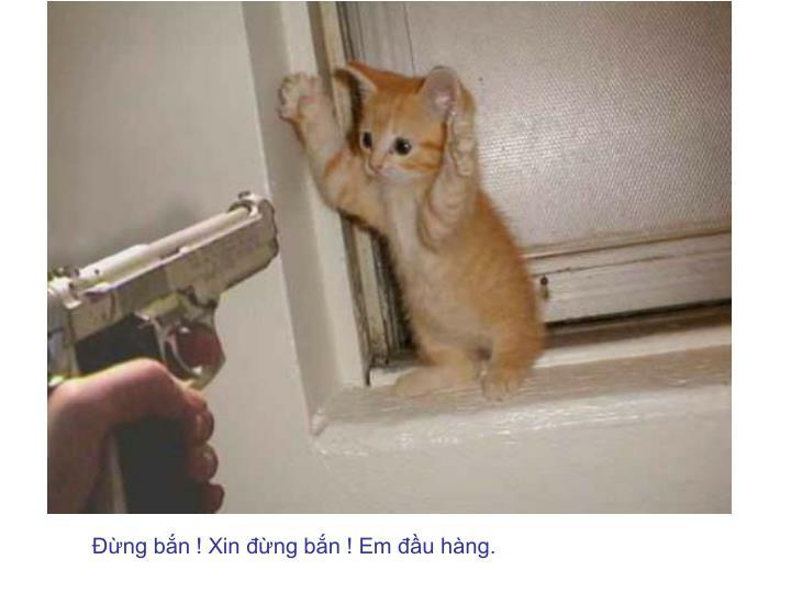 Đừng bắn ! Xin đừng bắn ! Em đầu hàng.