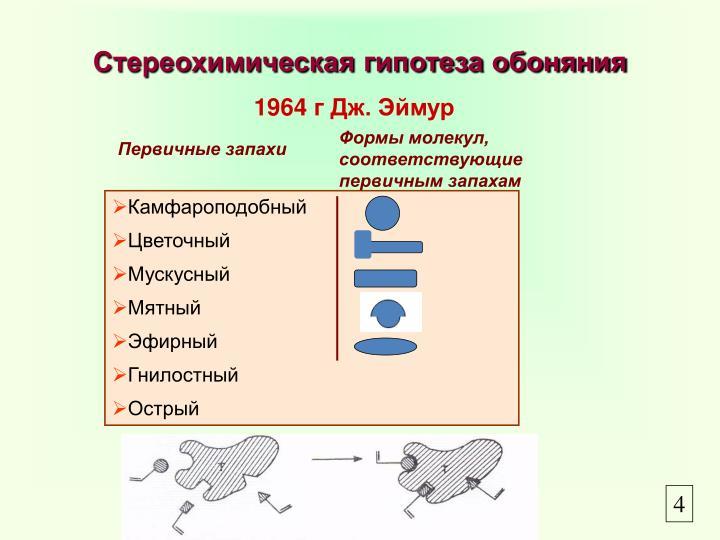 Стереохимическая гипотеза обоняния