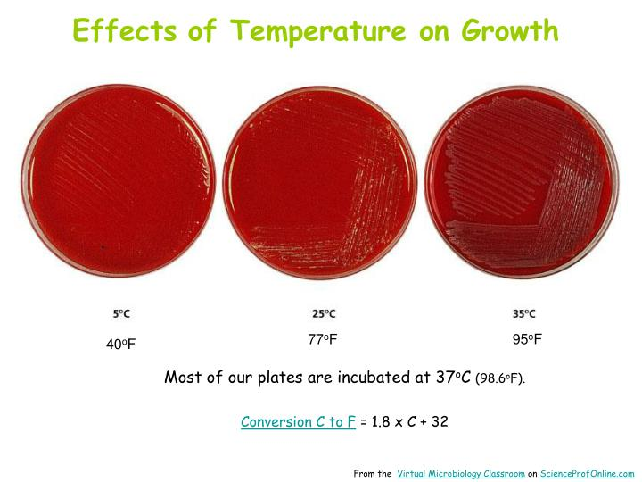 temperature effects on the growth of I would predict that increase in temperature (within the normal range) will increase the growth of chlorella the reactions which make up the process of photosynthesis, as you know, can be divided into two groups 1) photochemical reactions (the photolysis of water) and 2) the biochemical reactions of the calvin cycle.