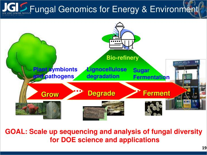 Fungal Genomics for Energy & Environment