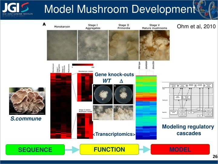 Model Mushroom Development