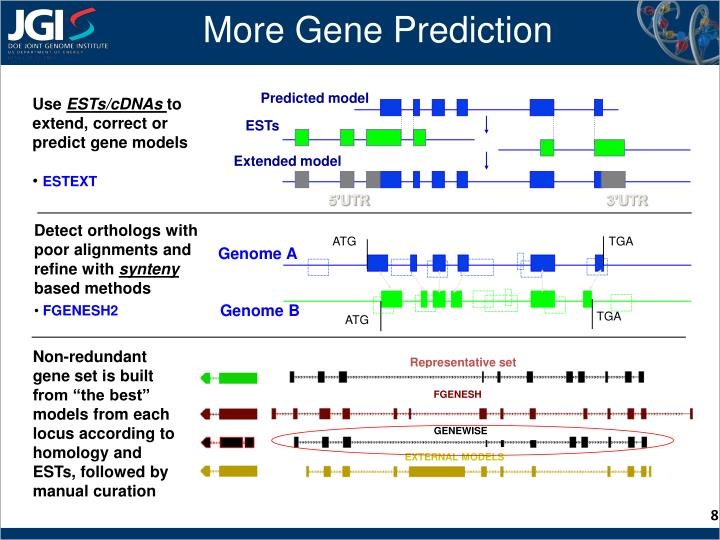 More Gene Prediction