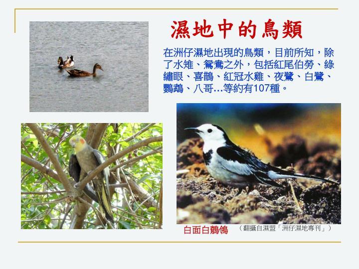 濕地中的鳥類