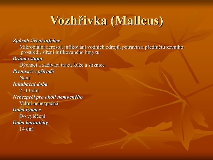 Vozhřivka (Malleus)