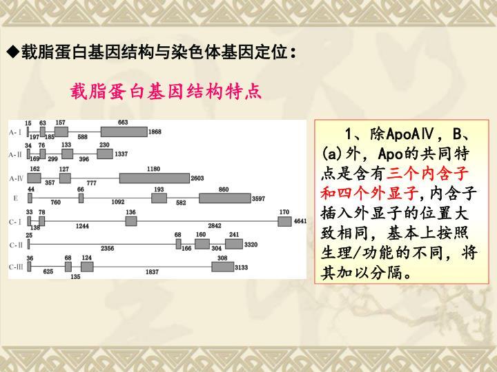 载脂蛋白基因结构与染色体基因定位