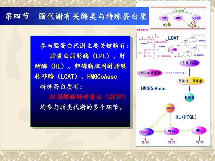 第四节  脂代谢有关酶类与特殊蛋白质