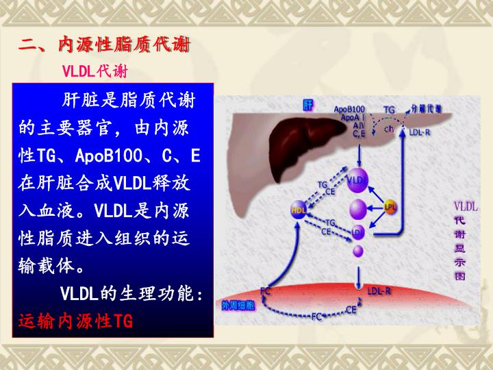 二、内源性脂质代谢