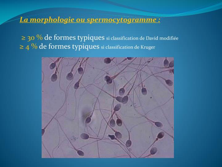 La morphologie ou