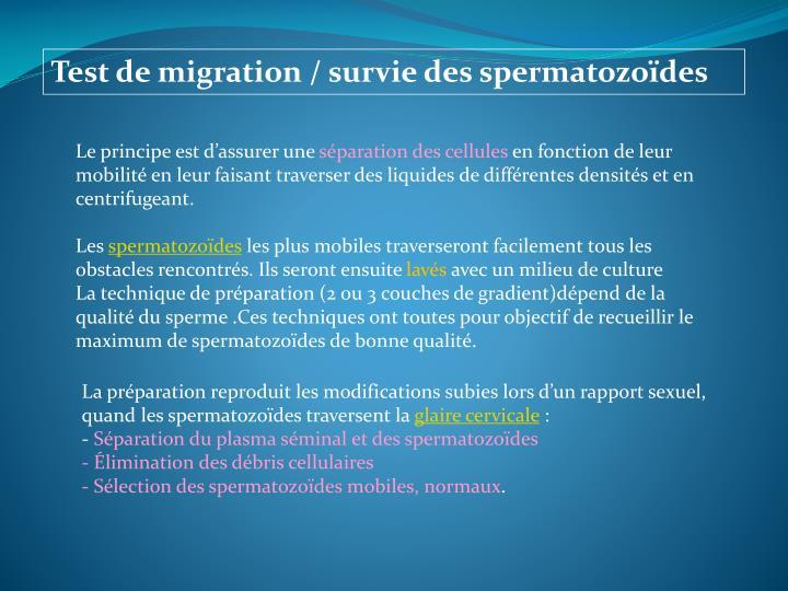 Test de migration / survie des spermatozoïdes