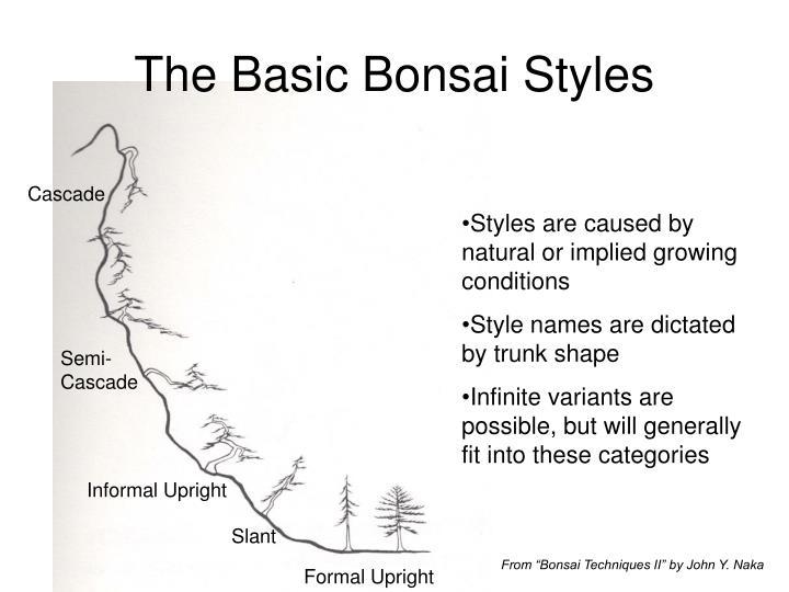 The Basic Bonsai Styles
