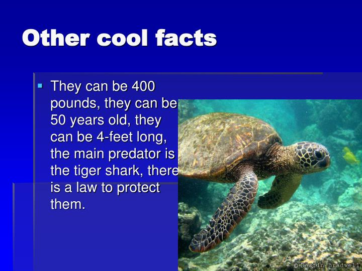 Other cool facts