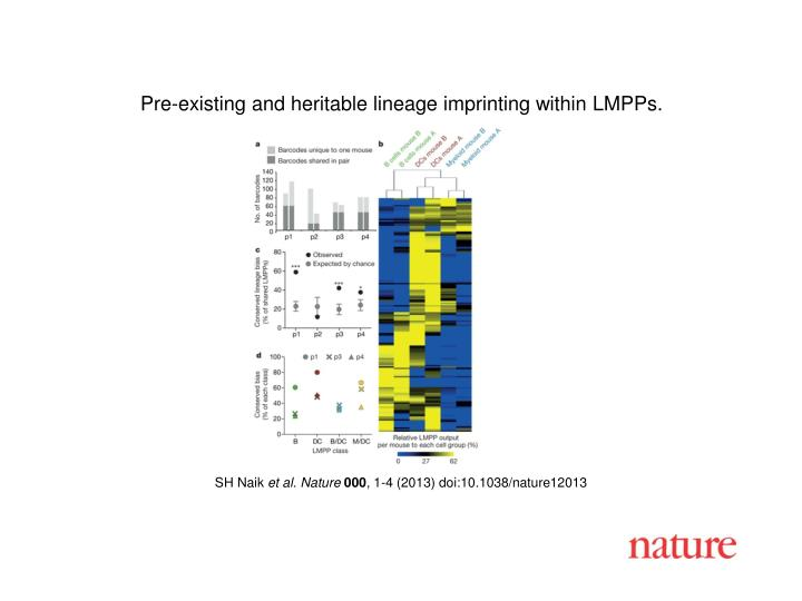Pre-existing and heritable lineage imprinting within LMPPs.