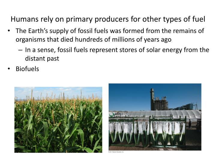 Humans rely on primary producers for other types of fuel