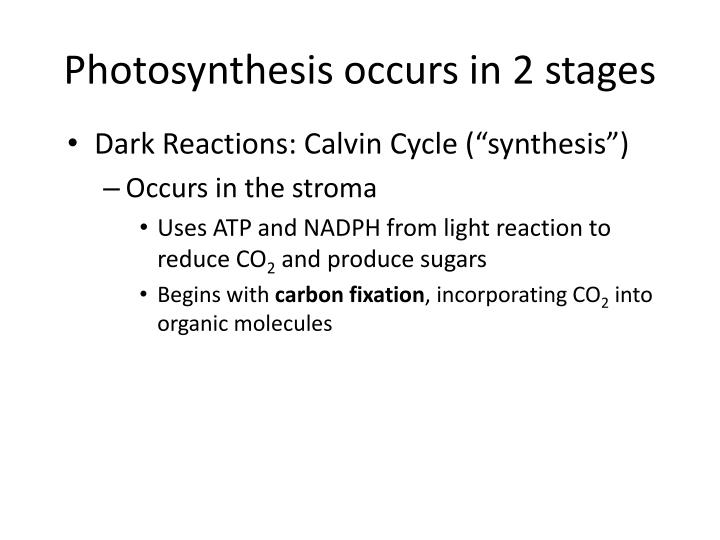 Photosynthesis occurs in 2 stages
