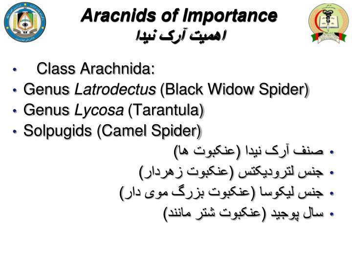 Aracnids