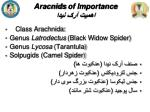 aracnids of importance