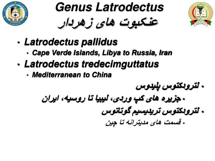 Genus Latrodectus