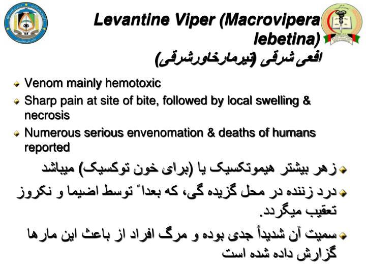 Levantine Viper (