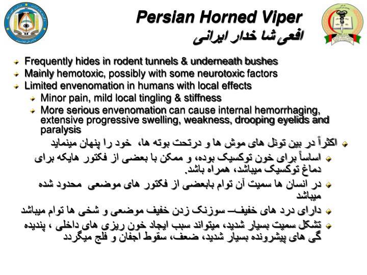 Persian Horned Viper