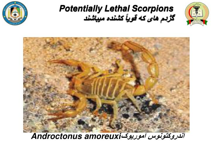 Potentially Lethal Scorpions