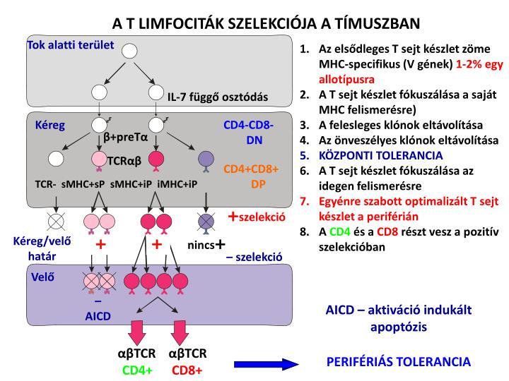 AICD – aktiváció indukált apoptózis