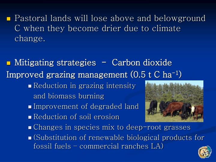 Pastoral lands will lose above and belowground C when they become drier due to climate change.