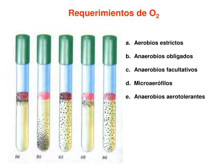 Requerimientos de O