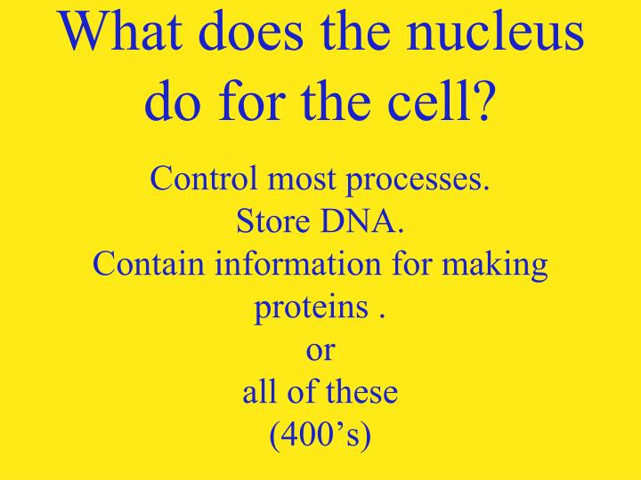 What does the nucleus do for the cell?