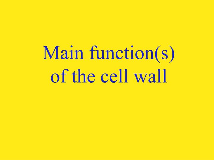 Main function(s) of the cell wall