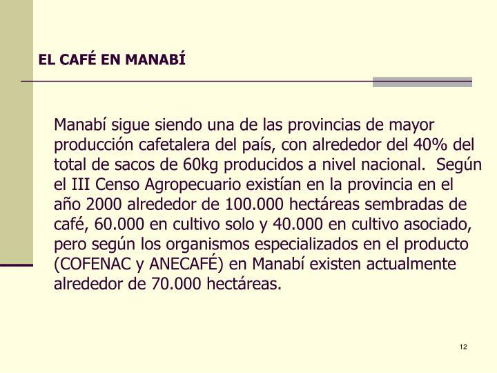EL CAFÉ EN MANABÍ