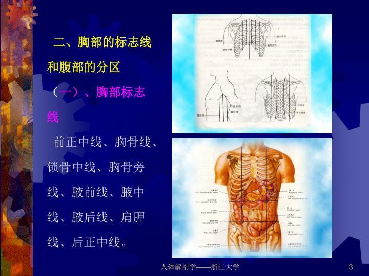二、胸部的标志线和腹部的分区