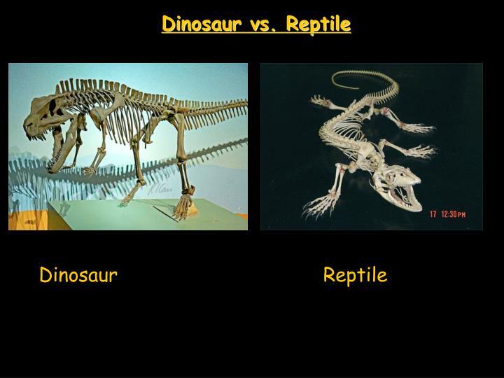 Dinosaur vs. Reptile