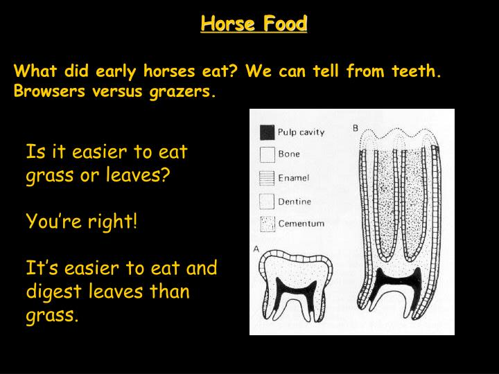 Horse Food