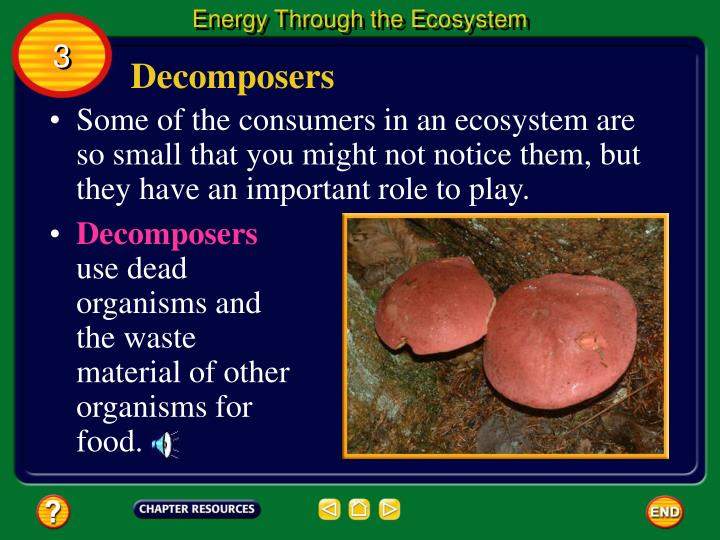 Energy Through the Ecosystem